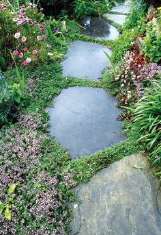 Creeping thyme prefers sun to part shade, and works well along a stepping-stone path. Photo by David Cavagnaro