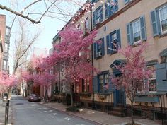 How to get a free tree in Philly for your yard this spring