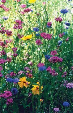 Wild Flowers, Beautiful Flowers, Purple Flowers, Exotic Flowers, Summer Flowers, Small Flowers, Yellow Roses, Fresh Flowers, Pink Roses