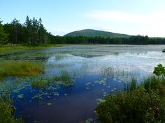 Aunt Betty's Pond--riding the carriage trail road in Acadia National Park, August 2012