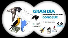 Daniel Aves: Argentina, Chile, Paraguay y Uruguay pajareando ju...