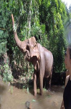 The Mondulkiri Project is located east of Phnom Penh. The Mondulkiri Project rescue overworked elephants so that they can retire away from elephant rides Elephant Sanctuary, Southeast Asia, Cambodia, Backpacking, Siem Reap, Projects, Pictures, Travel, Log Projects