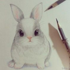 Colored pencil drawing - bunny rabbit.