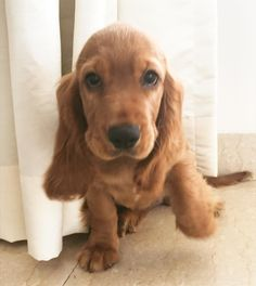 Things that make you go AWW! Like puppies, bunnies, babies, and so on. A place for really cute pictures and videos! Picture Video, Cute Pictures, Puppies, Sweet, Dogs, Animals, Candy, Cubs, Animales