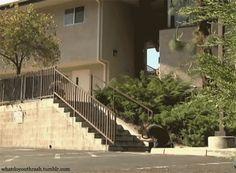 Riley Hawk in Shep Dawgs Vol.4, skateboarding gif.