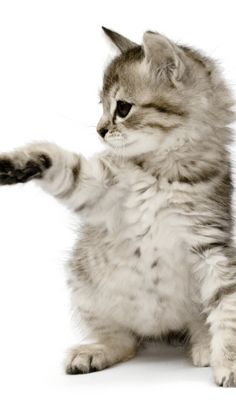 Feeling Happy, Cats, Animals, Image, Gatos, Animales, Animaux, Happiness, Animal