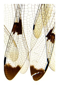 dragonfly wings (mary jo hoffman). Get inspired for modern home decor. See also: http://www.brabbu.com/en/inspiration.php