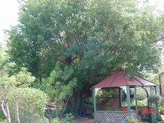 Tree In Side Yard
