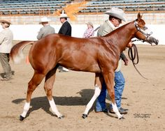 Terry Sartain and Frankie at Bakersfield Paint-O-Rama as a weanling.