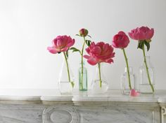 peonies: different stages, different vases