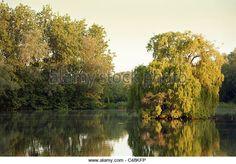Bildresultat för willow tree lake