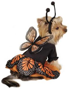 Zack  Zoey Monarch Butterfly Costume - Dog Halloween Costume
