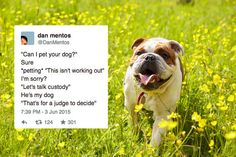 43 Tweets About Dogs That Will Make You Laugh Every Single Time
