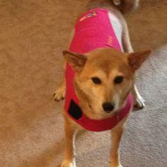 Zoey & her Thundershirt