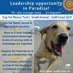 FT Vet Nurse/Tech, Small Animal, Gold Coast: opportunity to work in Paradise in a friendly, dynamic team supporting a growing team of vets. This role involves supporting the Head Nurse and taking on a leadership role to junior team members and requires BVetTech or Vert IV in Vet Nursing & a minimum of 4 years' experience.