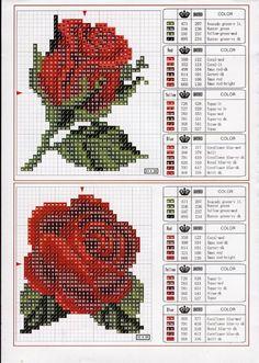 розы.jpg / Флора.