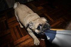 PEDRO HITOMI OSERA: Quero ter um animal de estimação. O que preciso sa...