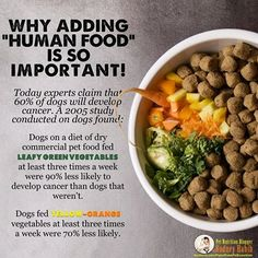 """""""HERE'S WHY IT IS SO IMPORTANT TO ADD FRESH """"HUMAN FOOD"""" TO YOUR PET'S KIBBLE    Today, ninety-six percent of pet owners around the globe are feeding dry commercial pet foods. Of those 96%, there is a large majority that believes dried commercial pet food is really all their pet needs and would never stop to consider the benefits of adding fresh """"human food"""".    (""""Human food"""" definition in this article: clean sources of meat-based proteins and some organic plant matter, not beer and nachos"""