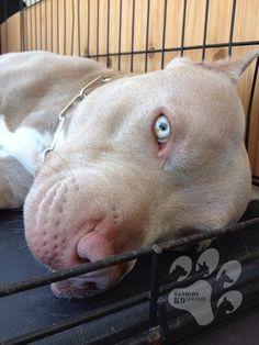Beautiful Eyes • Pitbull