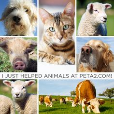 I just helped animals at peta2.com   Join Me Today and Help These Voiceless Helpless Animals as I Have,,,,   Norm