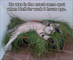 The cat equivalent of a stoner son living in your basement on a futon...