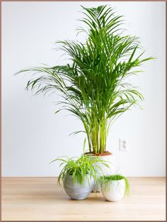(paid link) Best Non-Toxic Houseplants That are secure For Children #catsafehouseplants