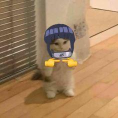 Memes Lol, Cat Memes, Otaku Anime, Manga Anime, Anime Kitten, Naruto Uzumaki Shippuden, Hinata Hyuga, Cat Icon, Cat Stands