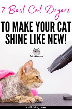 7 Best Cat Dryers to Make your Cat Shine Like New! - CatLicking