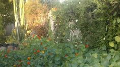 photos of gardens in mexicali | wild time in my garden