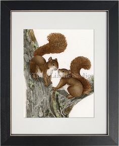 "Squirrels - 8""x10"" archival watercolor print by Tracy Lizotte"
