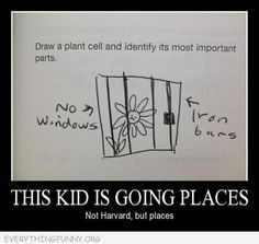 funny test answers draw a flower cell drew a flower in prison behind bars