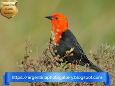 Birdwatching in Argentina [#1]: National Park Rio Pilcomayo, Esteros del Iberá Nature Reserve and Iguazú Falls. | Argentina Photo Gallery Iguazu Falls, Nature Reserve, Lake District, Bird Watching, Virtual Tour, Something To Do, The Good Place, Photo Galleries, National Parks