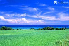 今年は1月15日から小浜島製糖工場の稼動が始まり、 例年3月末ぐらいまで、島の風物詩であるサトウキビ刈りが行われます。