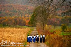 956 winter walk ii a rown of amish women in white aprons walk together down a path fall colors autumn