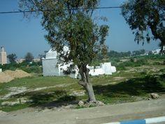 #magiaswiat #podróż #zwiedzanie #agadir #blog #afryka  #maroko #essaouir #ocean #safi #qualidia #al-dzadida #suk #casablanka #rabat #meknes #volubilis  #fez #meczet #marakesz Agadir, Golf Courses, Sidewalk, Ocean, Blog, Side Walkway, Walkway, The Ocean, Blogging