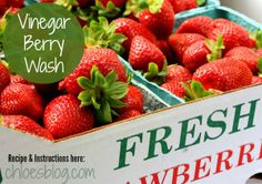 Recipe and instructions for Vinegar Berry Wash to keep berries fresh and kill bacteria and mold from ChloesBlog.com