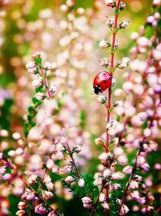ladybug/ladyluck