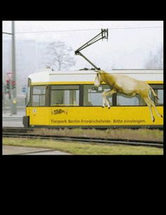 Tierpartk Berlin-Friedrichsfelde. Bitte einsteigen. LOL