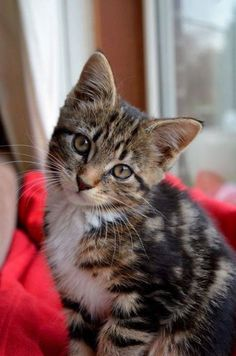 Cats Are So Cool offers cool cat products for passionate cat lovers. Cute Cats And Kittens, Baby Cats, Cool Cats, Kittens Cutest, Pretty Cats, Beautiful Cats, Cute Baby Animals, Funny Animals, Gatos Cats