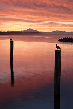 White Rock, BC -- gorgeous snap! This place offers some great opportunity for wonderful photos during the magic hour.