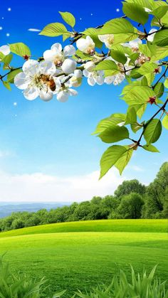 Spring Background Wallpaper by im_mehta - cd - Free on ZEDGE™ Studio Background Images, Photo Background Images, Background Images Wallpapers, Photo Backgrounds, Background For Photography, Nature Photography, Spring Backgrounds, Beautiful Landscape Wallpaper, Beautiful Flowers Wallpapers