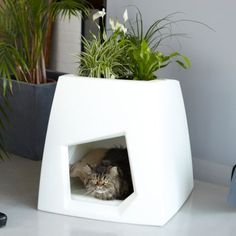 "The Kokon Cat House: It's a modern and innovative cat house called ""Kokon""; it comes from Pousse Creative. Atop of it you can plant a small roof garden and it comes with a small pillow for your cat to enjoy a nice nap."