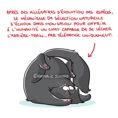 Ce matin, j'observe le rituel et étrange ballet contorFionniste de Chat-Bouboule et au passage je m'extasie devant son indéfectible et inébranlable volonté de se toiletter le croupion. #chat #chatbouboule #cat #funnycat #dessin #drawing #illustration #illustratrice #frenchillustrator #illustratricefrancaise #bd #bandedessinee #comics #humour #humor #funny #nathaliejomard Illustrations, Drawing, Darth Vader, Ballet, Lol, Fictional Characters, Instagram, Natural Selection, Just For Laughs
