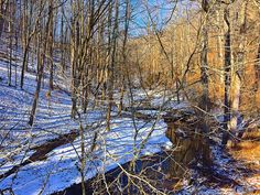 Winter Nature Walk Photograph
