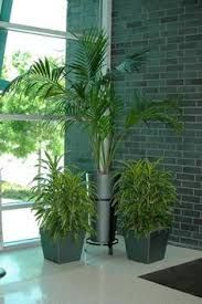 height of plants needed.  6-9'