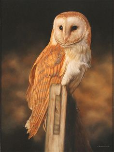 Carl Whitfield, Original oil painting on panel, Barn Owl                                                                                                                                                                                 More