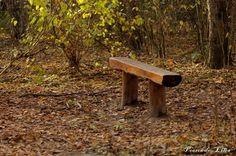 Aroma del viento http://lilianoesminombrereal.blogspot.com.es/2011/10/aroma-del-viento.html