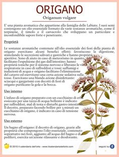 Il Calendario dell'Orto Natural Life, Natural Health, Healthy Cooking, Healthy Life, Healthy Herbs, Health Eating, Green Life, Medicinal Plants, Health And Wellbeing