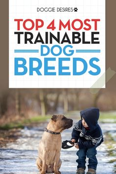 Top 4 most trainable dog breeds >> http://doggiedesires.com/most-trainable-dog-breeds/