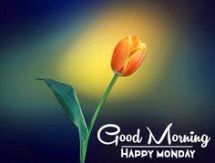 Monday Good Morning Wishes, Monday Wishes, Monday Blessings, Happy Akshaya Tritiya Images, Happy Diwali Images, Good Morning Beautiful Pictures, Good Morning Images Hd, Happy Karwa Chauth Images, Navratri Wishes